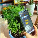 식물등 vs 자연 햇빛 Lux 비교 해보니 놀라운 결과가 나왔습니다.